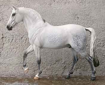 Eberl Gallery - Sport/Warmblood artist resins