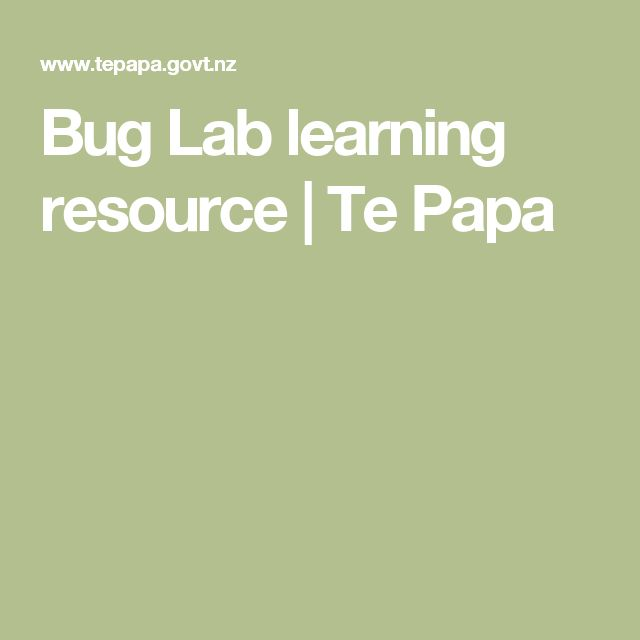 Bug Lab learning resource | Te Papa