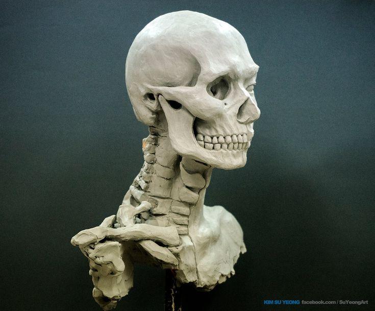 Comparative macroanatomical study of the neurocranium in ...