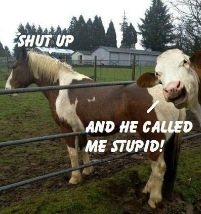 funny horse pictures with captions   horse stuck ,cow laughing   Funny Animal Captions