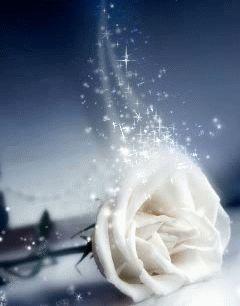 Gif de rosas blancas | todo en imágenes