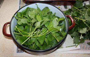 Zitronenmelissesirup selber machen - Rezept - Anleitung - einkochen