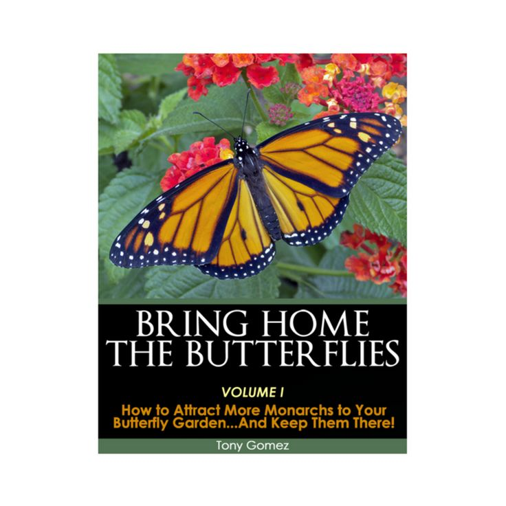If Youu0027re Planning To Start A Butterfly Garden In 2018, Check Out Our