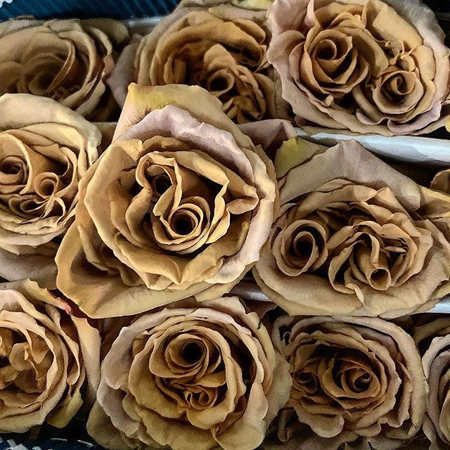 Toffee Roses From Florabundance Wholesale Friday Feeling Brown Flowers Ready For First