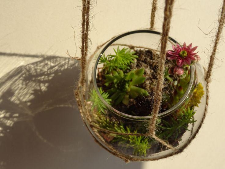 Les 13 meilleures images du tableau nos kits terrarium sur pinterest terraria debutant et - Kit terrarium plante ...
