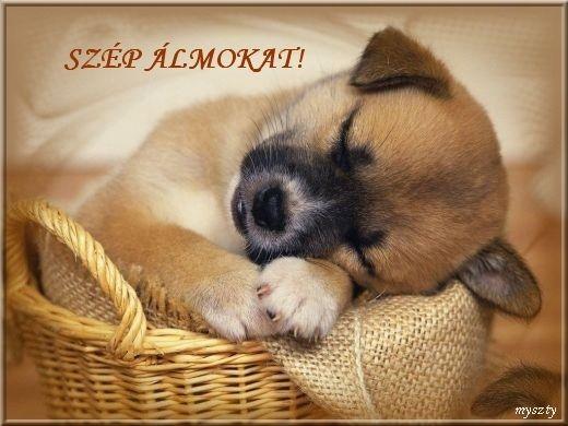 Nyugodt estét, jó éjt!,Nyugodt éjszakát!,Szép, nyugodt délutánt!,Szép álmokat!!!!!,Kellemes estét, jó éjszakát!,Jó estét, szép álmokat!,Kellemes délutánt!,Szép estét mindenkinek!,Jó estét, szép hétvégét!,Erzsikétől, - tothneevi Blogja -