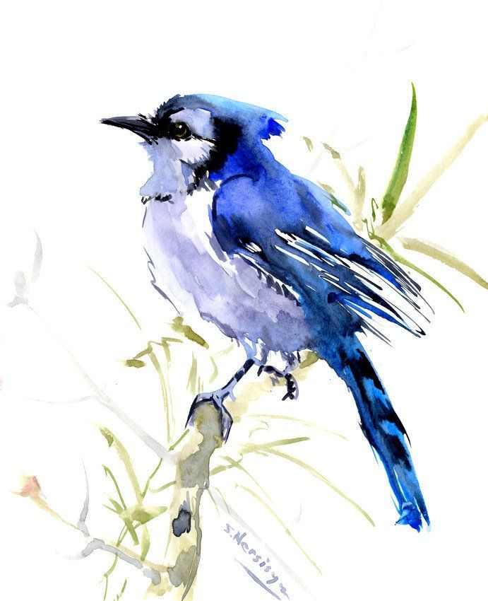 Blue Jay One Of A Kind Watercolor Art Painting Bird Art Blue