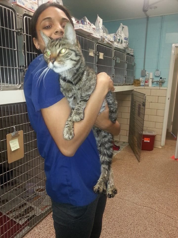 OldLyme AnimalControl This sweet kitty was found on