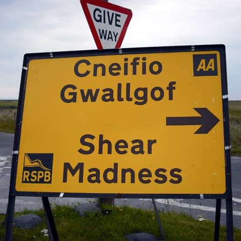 Shear madness!!