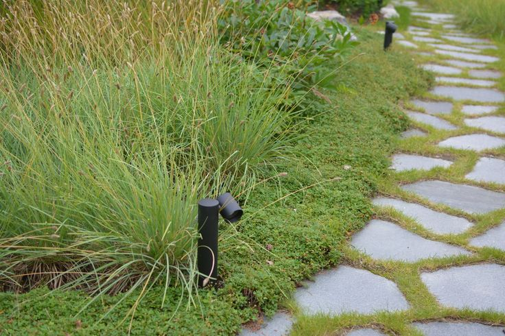 Planting in garden in Stockholm. Garden by anna design and planting