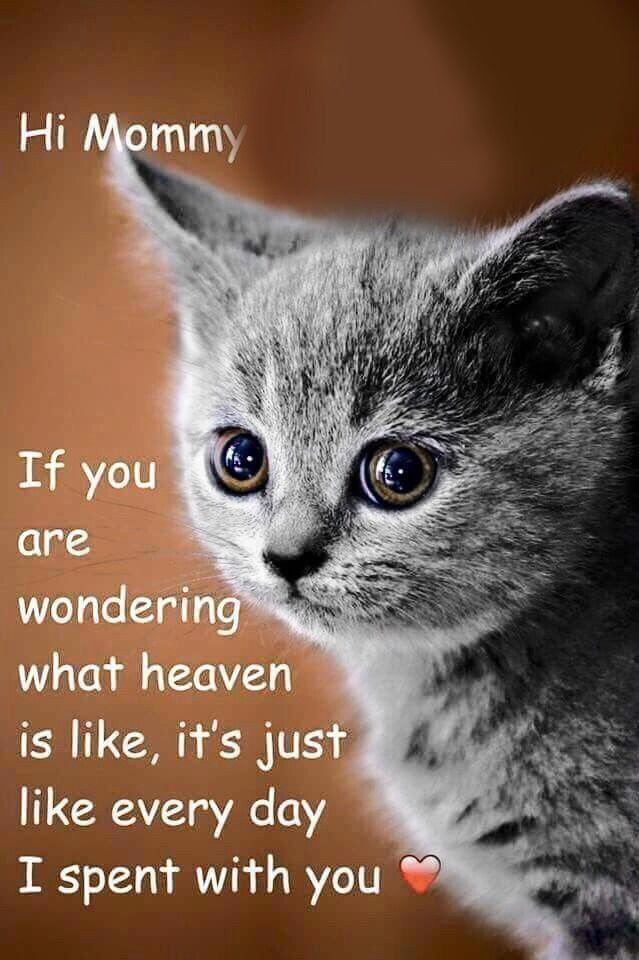 120 Quotes That Cat Owners Will Surely Understand Cats Catlovers Catquotes Cats Pet Grief Pet Loss Grief