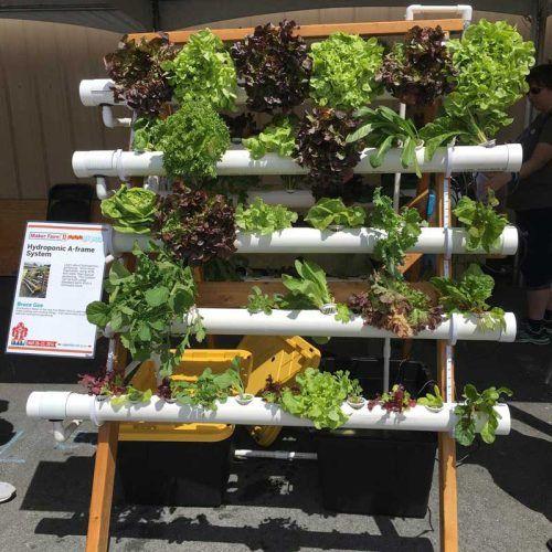 Best 25 Regrow Romaine Lettuce Ideas On Pinterest: 25+ Best Ideas About Hydroponic Lettuce On Pinterest