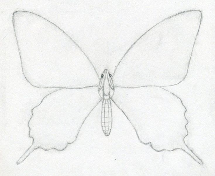 Butterfly Line Drawing Easy : The best easy butterfly drawing ideas on pinterest