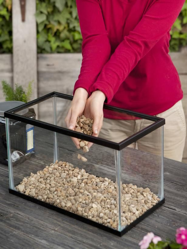 How to Make Your Own Terrarium - on HGTV Pitcher plants/ venus flytraps?