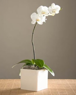 Phalaenopsis White Orchid Centerpieces