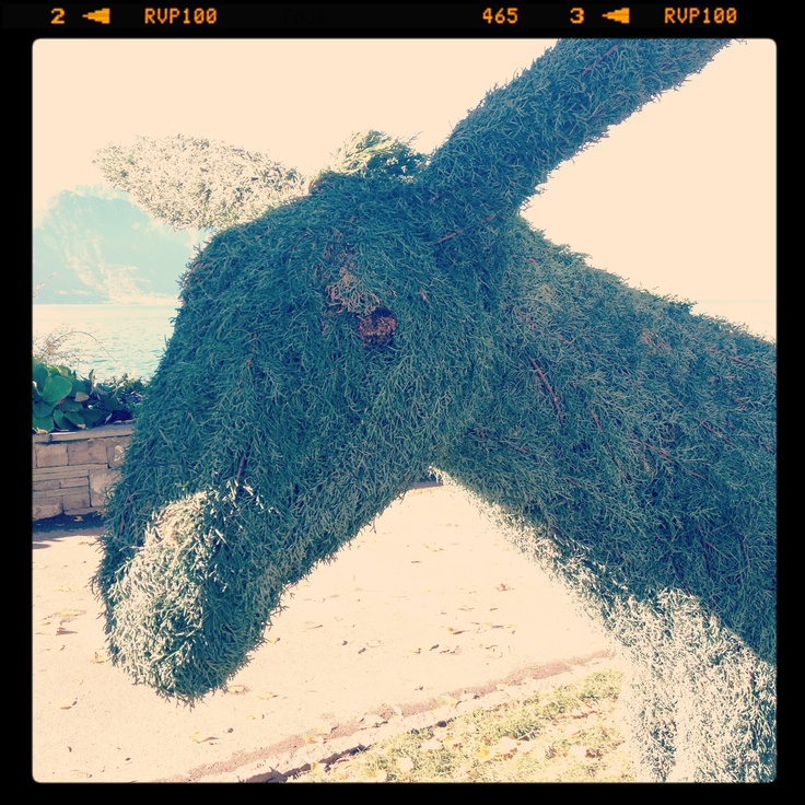 Donkey in Montreux Riviera  #artistic #art #nature