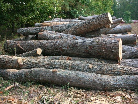 Should you burn rotten firewood or punky firewood?  Read here to find out.