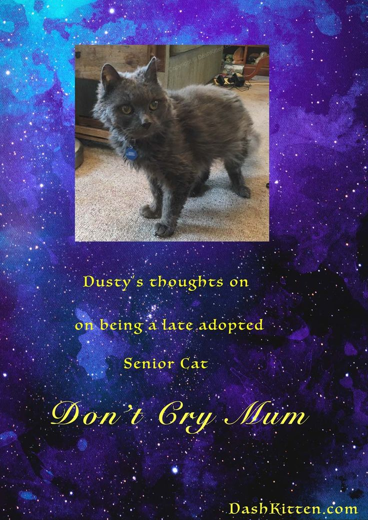 How would a senior cat respond to his adoption? Don't Cry Mum, Celebrates a Senior Rescue.....