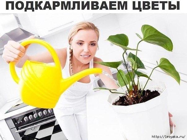 Вкусная подкормка для комнатных цветов! - Цветы комнатные - Женский Мир