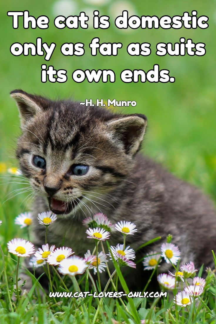 Cat Quotes Poems And Displays Of Feline Literary Prowess Cute Baby Cats Cat Pics Kittens Cutest