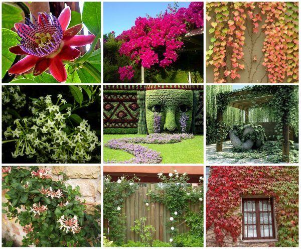 Las mejores plantas enredaderas para llenar de vida espacios interiores y exteriores ficus - Plantas interiores ...