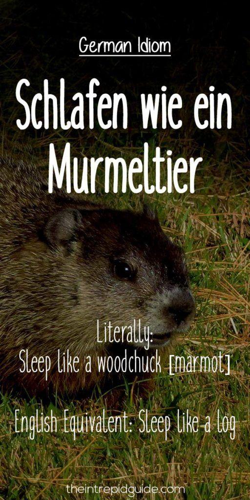German Idioms: Schlafen wie ein Murmeltier. Literally: Sleep like a woodchuck [marmot]. English Equivalent: Sleep like a log.