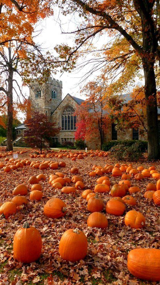 Pumpkin Season.. Wellesley HIlls, Massachusetts, U.S