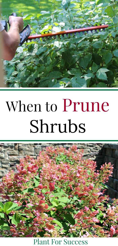 When To Prune Shrubs Planting Shrubs How To Trim Bushes Shrubs
