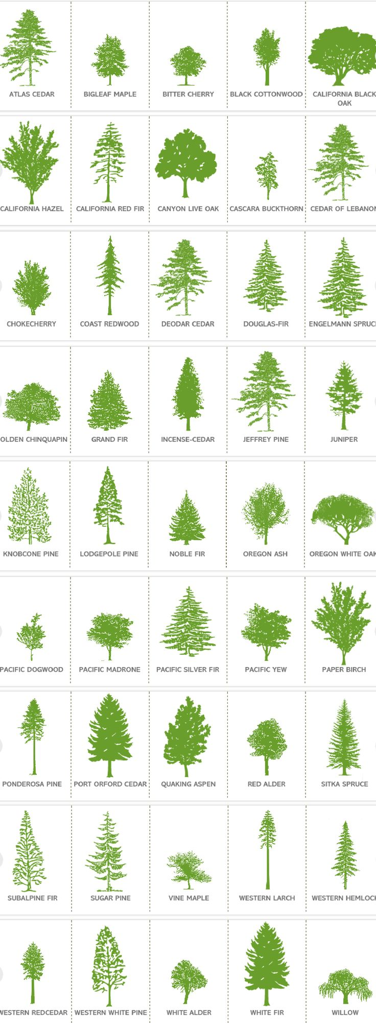 OREGON TREES // descriptions at: http://oregonforests.org/content/tree-variety#tree