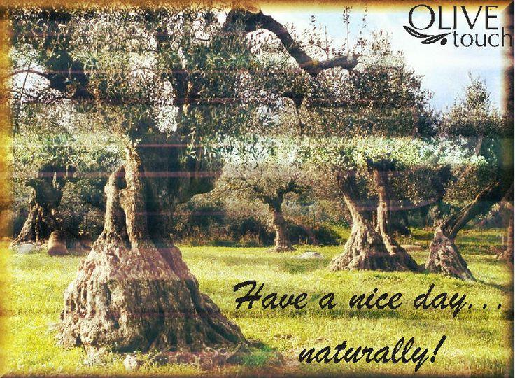 #olivetouch #olivetree #oliveoil #olivemill #olivegrove