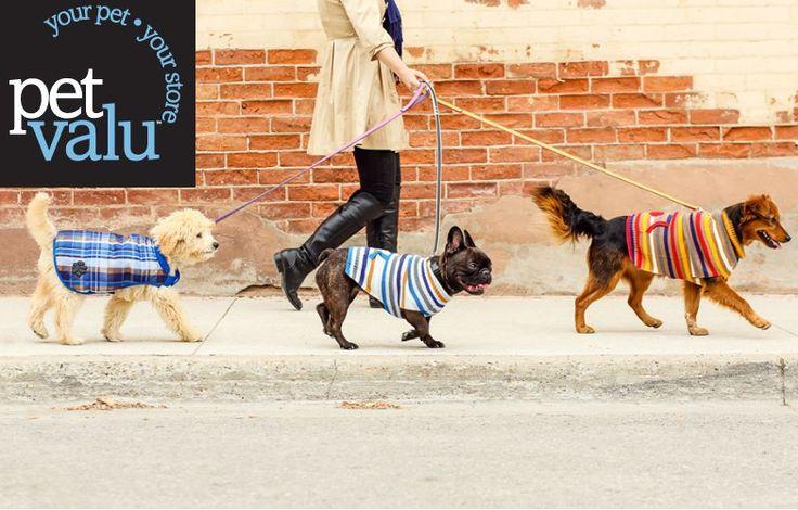 Performance Dog Food Pet Valu