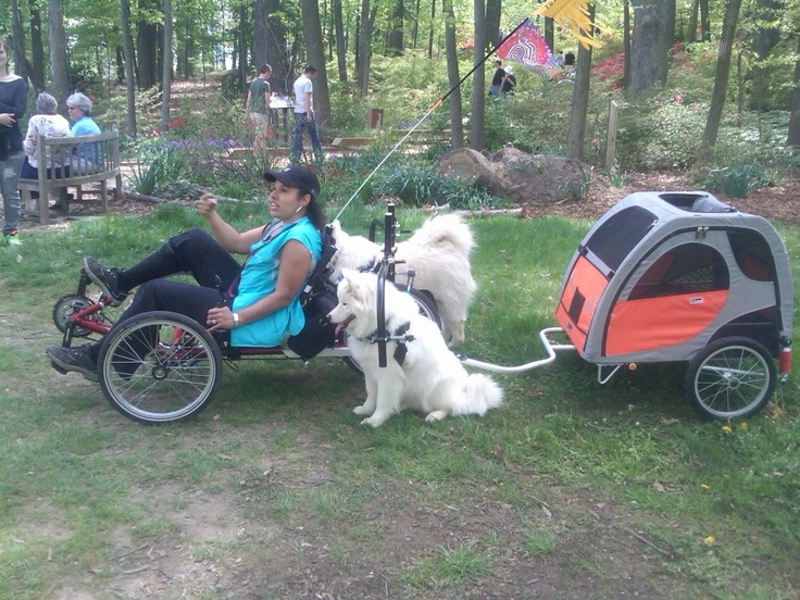 Two Dogs And A Trailer How Cool Is That Trikes