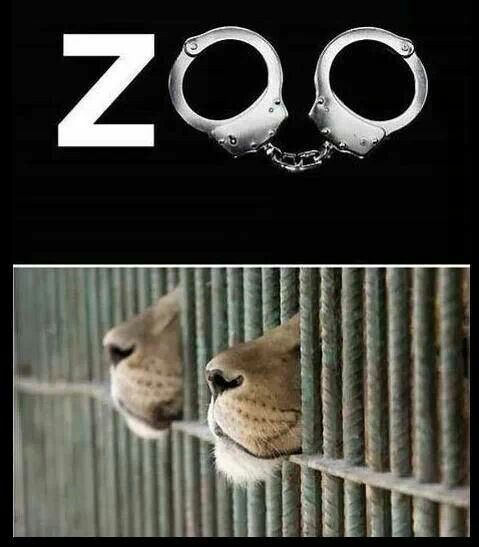 zoo's should only be used as rehab/hospitals - not full of animals that have been abused by trapping, abused during shipping, and even if the zoo doesn't physically abuse them locked in a cell is mental abuse for anyone...