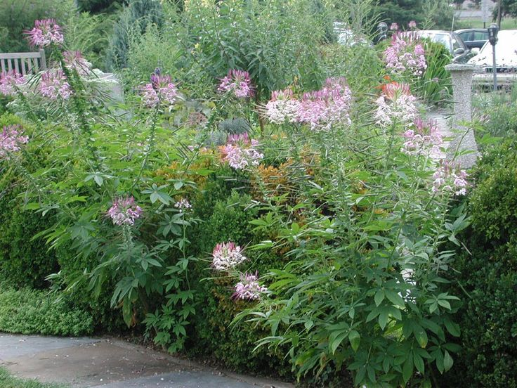 Tall Garden Flowers 25 best tall spike flowers for back of the border images on