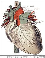 paragraph about human body facts Human anatomy or anthropotomy is a special field within anatomy it studies structures and systems of the human body, leaving the study of tissues to histology and.