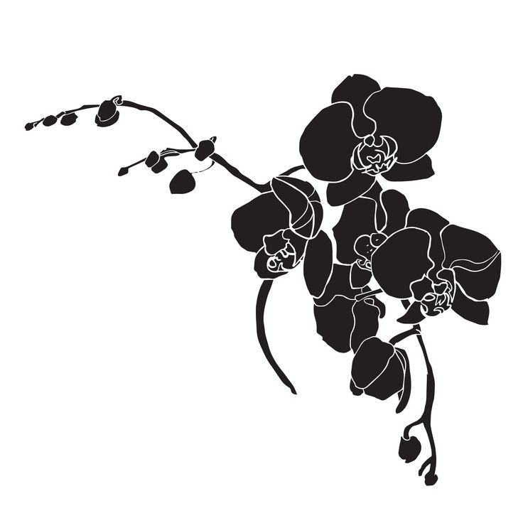 Black Orchid With White Outline On White Background Template Stencil Hand Drawing Hand Drawn Cvetochnye Risunki Cvetochnye Kartiny Cherno Belye Tatuirovki