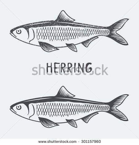 herring vector illustration - stock vector