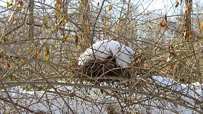 Nest in winter.Briskly Walks, Walks In