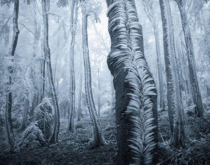 Frozen forest in Jeseníky, Czechia