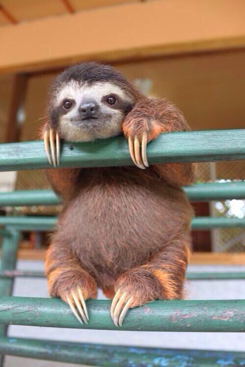 I want a Sloth!!!!!