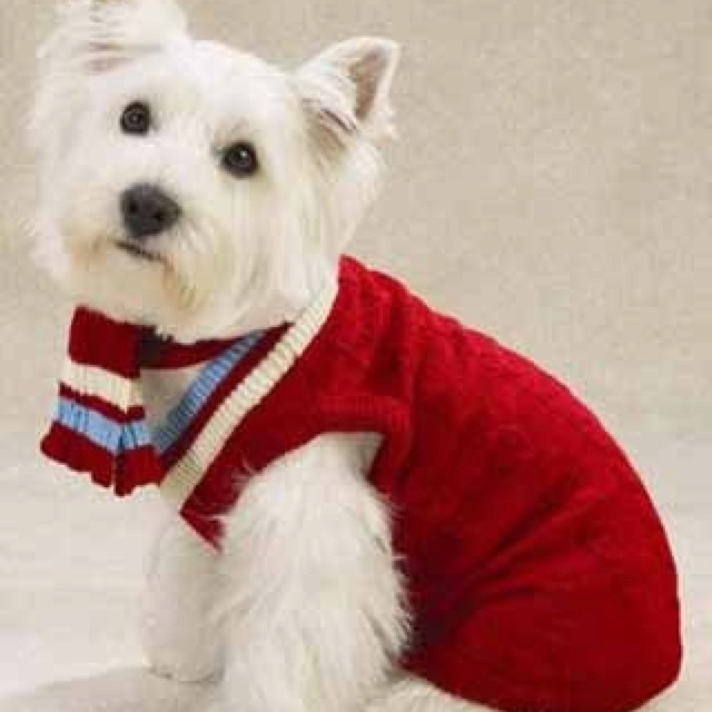 Knitting Pattern For Westie Dog : 17 Best images about Dogs in sweaters on Pinterest Snow ...