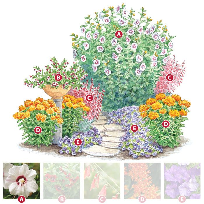 Hummingbird garden plan - we have sooo many of them in our backyard, they are lovely to watch - this will be good for next summer