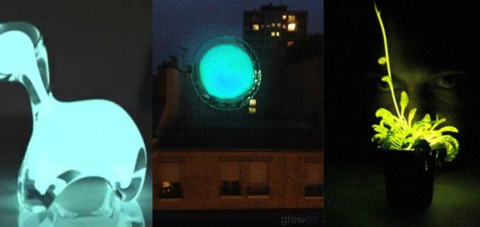 Como alternativa à energia elétrica e emissão de CO2, startup cria sistema com bactérias luminosas