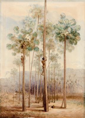Cabbage Palms, Dapto, Illawarra (NSW)  1844-45,  George French Angas