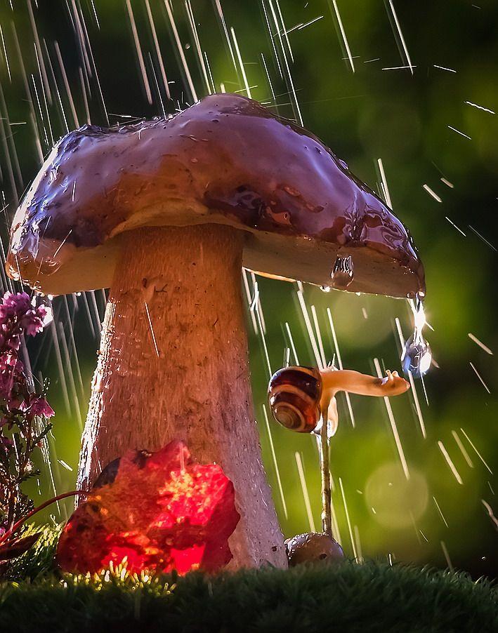 старой гриб под дождем картинки подборку стала