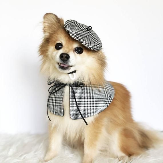 Dogs Beret Cape Set Handmade Dog Hats Dog Caps Baseball Etsy Dog Hat Dog Clothes Patterns Dog Clothes