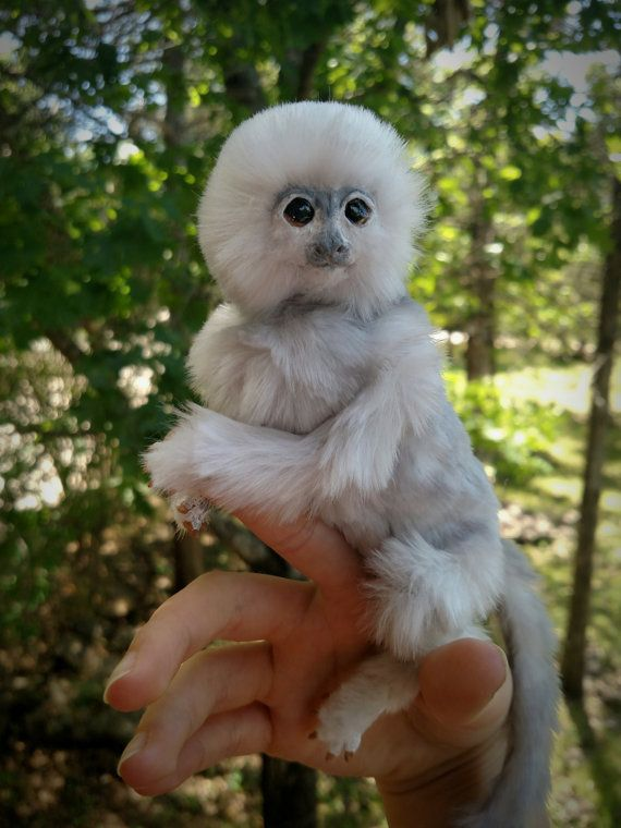 FOR SALE Squatch the silver baby marmoset monkey by PensAnNeedles
