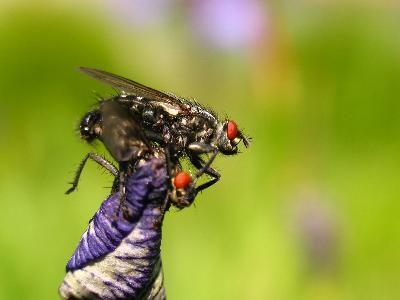 M s de 1000 ideas sobre trampas para moscas en pinterest - Moscas pequenas cocina ...