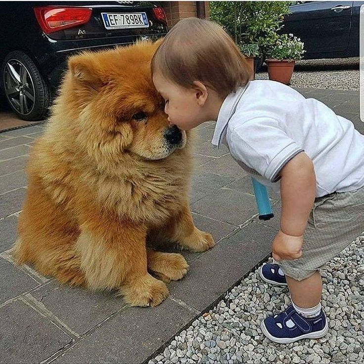 """10.3k Likes, 50 Comments - Dogs Puppies World (@dogspupsworld) on Instagram: """"Bestfriends ❤️❤️ Follow us (@dogspupsworld) . . #puppies #puppylove #dogoftheday #chow #chowchow…"""""""
