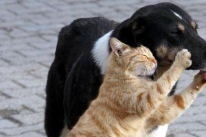 Yayınlanan genelgedeki kurallara göre köpek sahipleri köpeklerini günde en az 3 kez gezdirecek, kedi sahipleri kedilerini ensesinden tutarak kaldıramayacak. Ev hayvanı besleyenlerin daha iyi kontrol ve denetimi Gıda Maddeleri ve Hayvan Sağlığı Kontrol Dairesi tarafından sağlanacak.